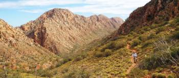 Verdant outback landscape on the Larapinta Trail | Latonia Crockett